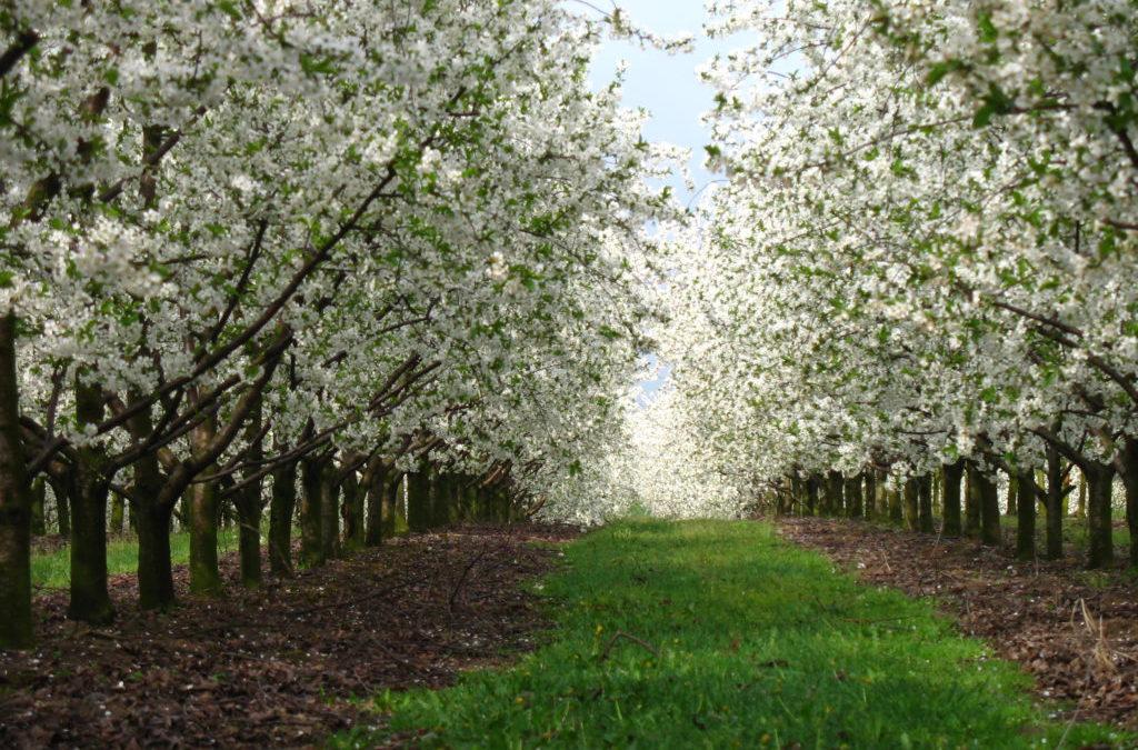 Owocowy Raj Nad Zalewem – strona internetowa z prezentacją gospodarstwa agroturystycznego